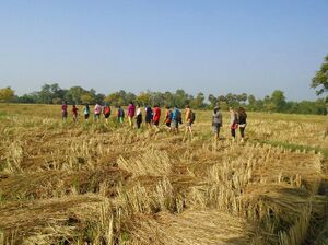 Growing food 2017 10 Deepanam Annapurna rice harvest.jpg